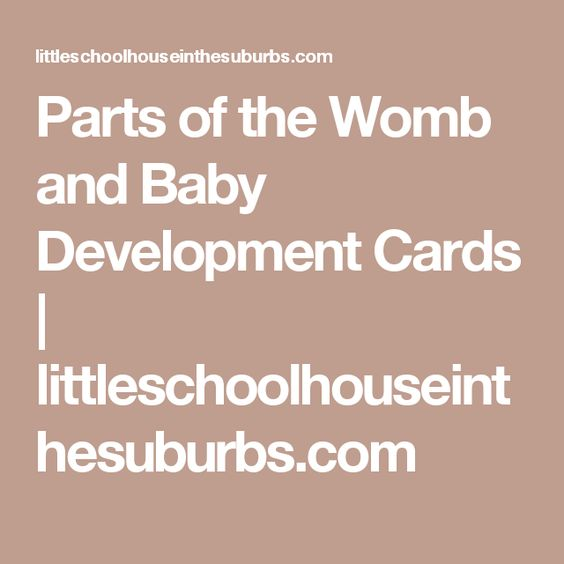 Parts of the Womb and Baby Development Cards | littleschoolhouseinthesuburbs.com
