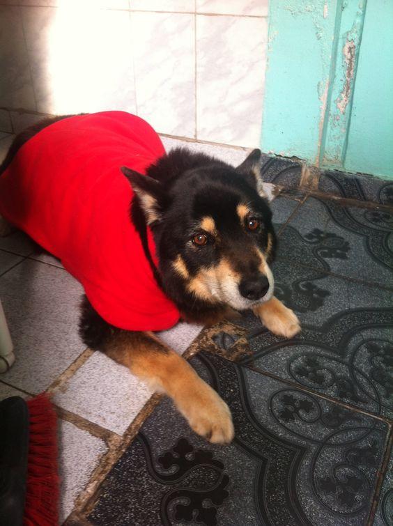 Uno de mis perritos (Q.E.P.D)