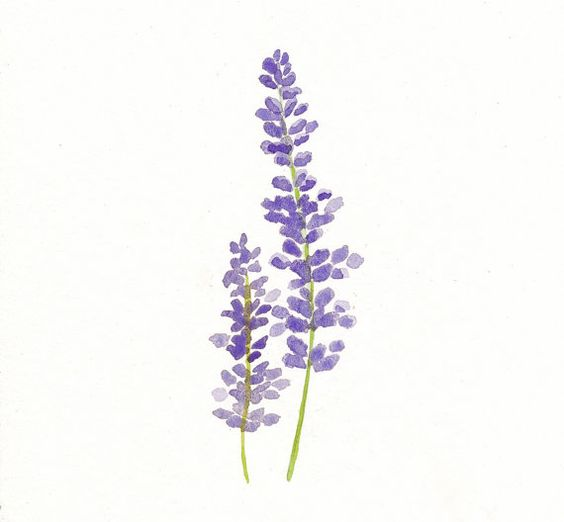 Lavender watercolor print botanical art lavender art flower wall