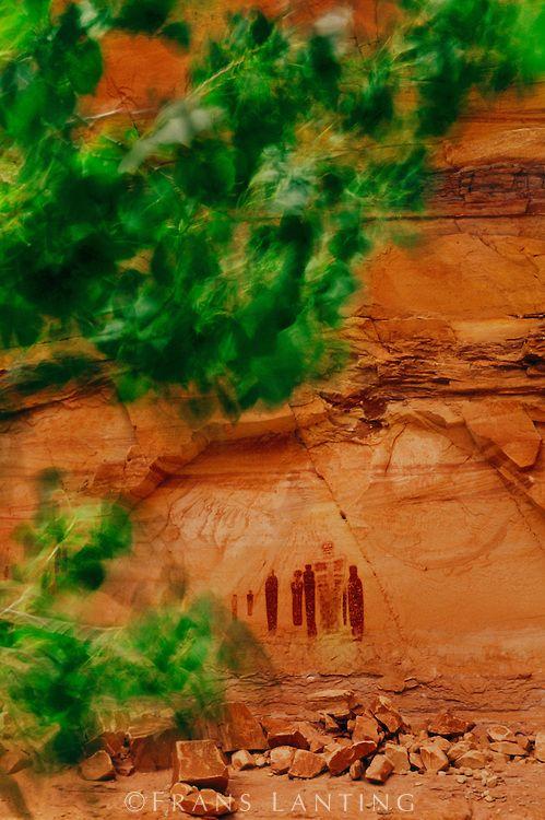 Barrier Canyon style rock art, Horseshoe Canyon, Canyonlands National Park, Utah