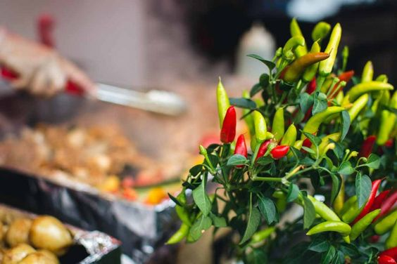 Chilli pepper plant - FoodiesFeed