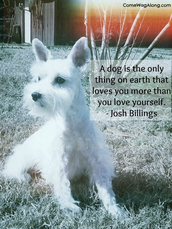 The best dog quotes everrrr!  #dogquote #quotes #dogs