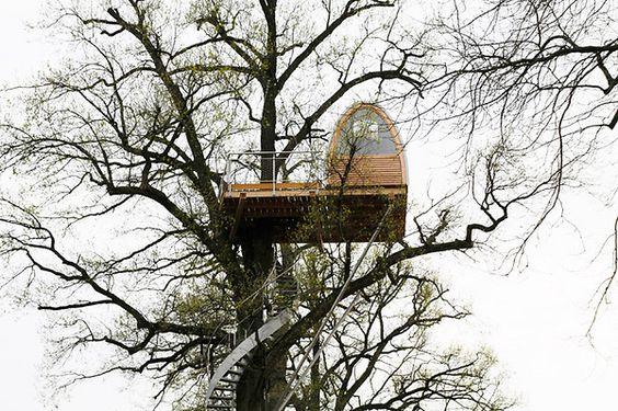 baumraum | Around the Oak:
