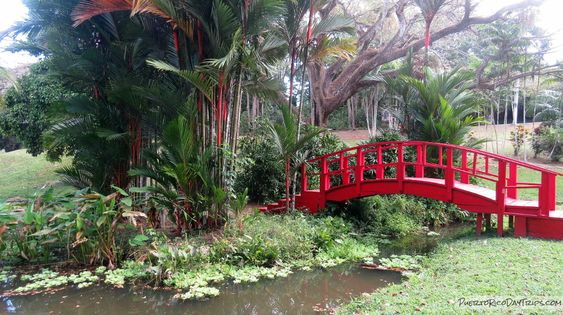Jardin Botanico San Juan