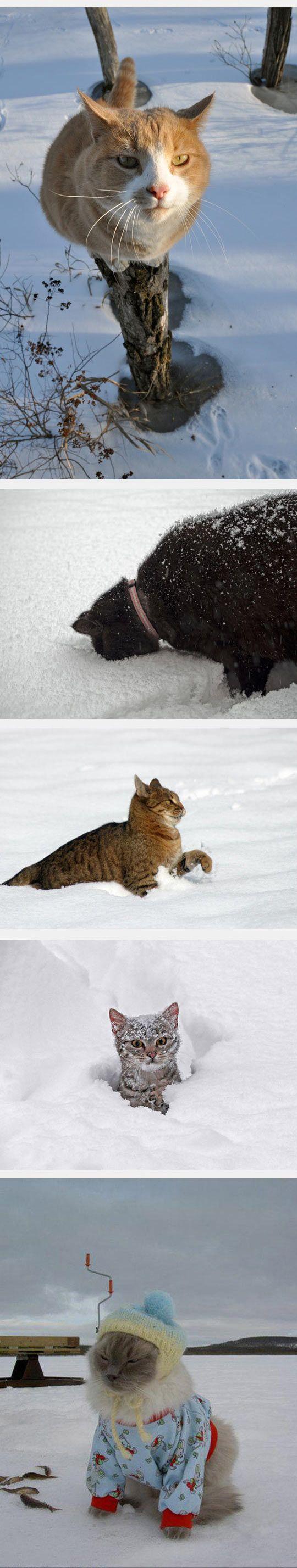 cats enjoying the snow...