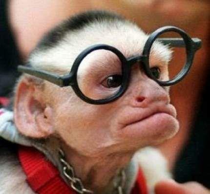 Fantastis 16 Foto Monyet Lucu Banget Download 93 Gambar Monyet Ketawa Ngakak Terbaru Gratis Source Www Metroworld Id 10 Gaya Mony Lucu Gambar Gambar Lucu