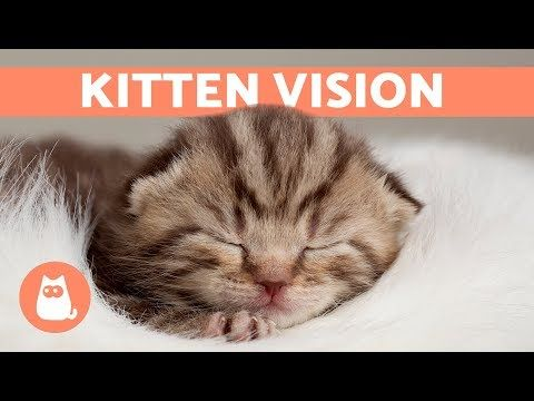 When Do Kittens Open Their Eyes After Birth Find Out Here Youtube