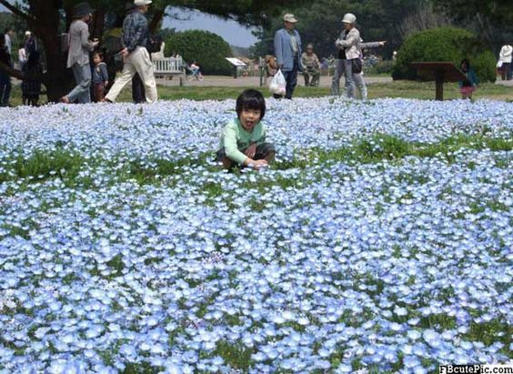 nice blue flower pictures for facebook 2