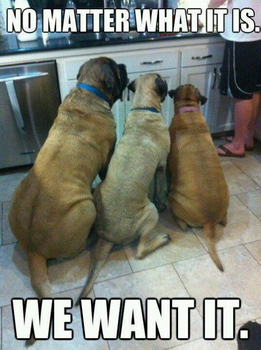 LMAO!! This is so my dogs