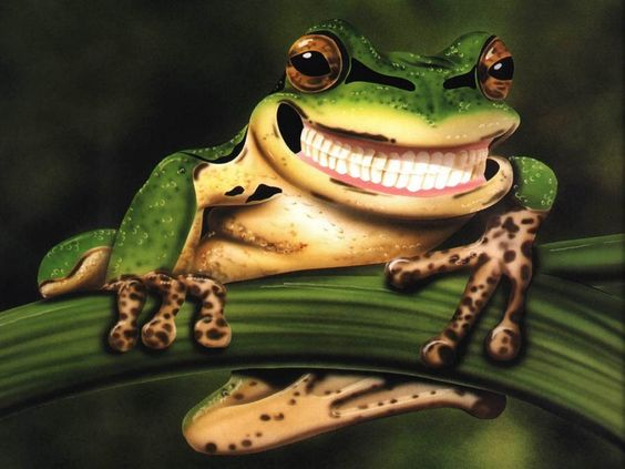 1000  images about Awesome Amphibians on Pinterest