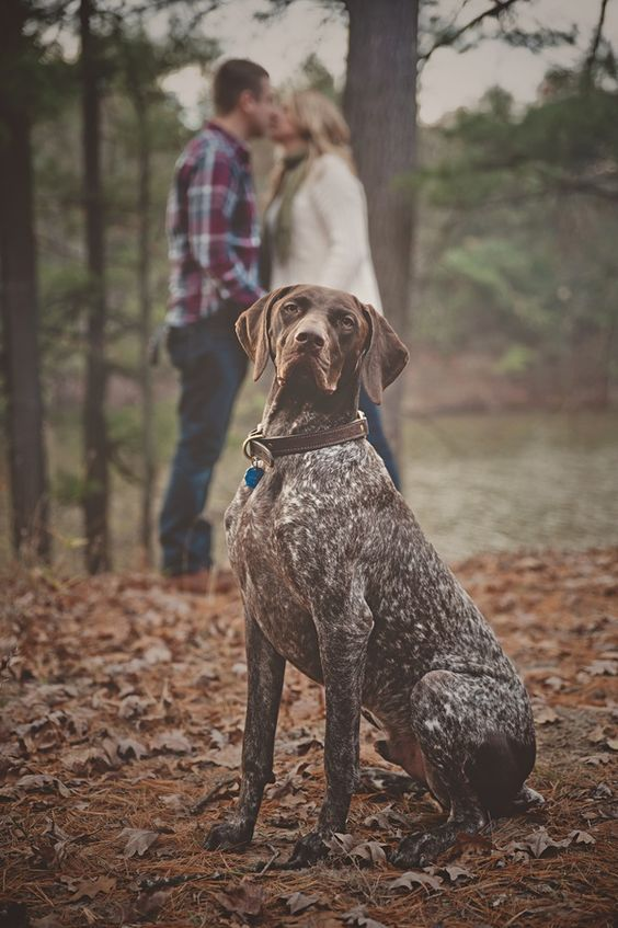 © Patrick Hadley Photography | Daily Dog Tag | German-Shorthaired #Pointer, #Engagement