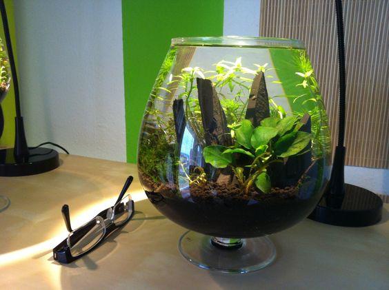 Liter nano Tank #aquascaping Aquascaping Pinterest Aquascaping ...