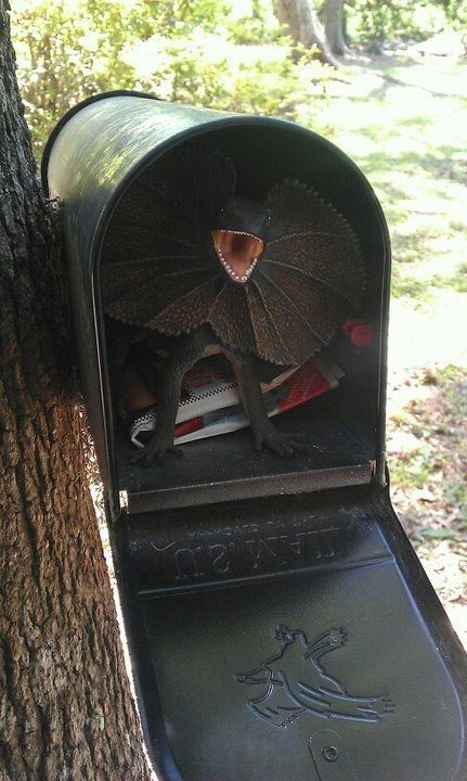 Put a surprise in the mail box.