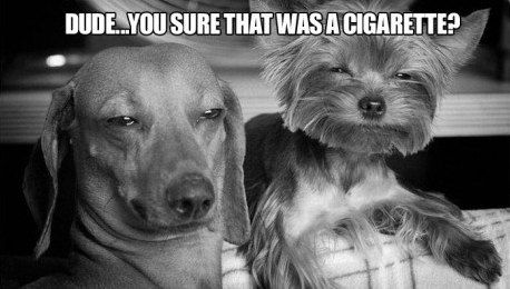Dude...you sure that was a cigarette?