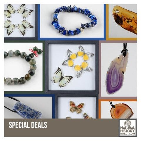 Special Deals - Shop the collection, website updated daily, click here now www.NaturalHistoryDirect.com