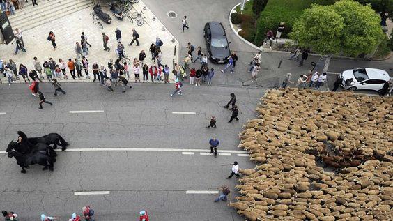 Traverser Marseille à cheval, à mouton