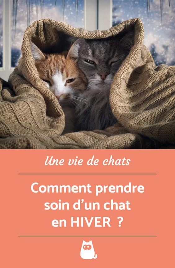 L'hiver et là et avec lui, arrive le froid. Découvrez nos 5 conseils pour prendre soin d'un chat en Hiver.  #ChatDrole #ChatMignon #ChatEnHiver #AnimauxDeCompagnie #SOccuperDUnChat #CommentPrendreSoinDUnChatEnHiver