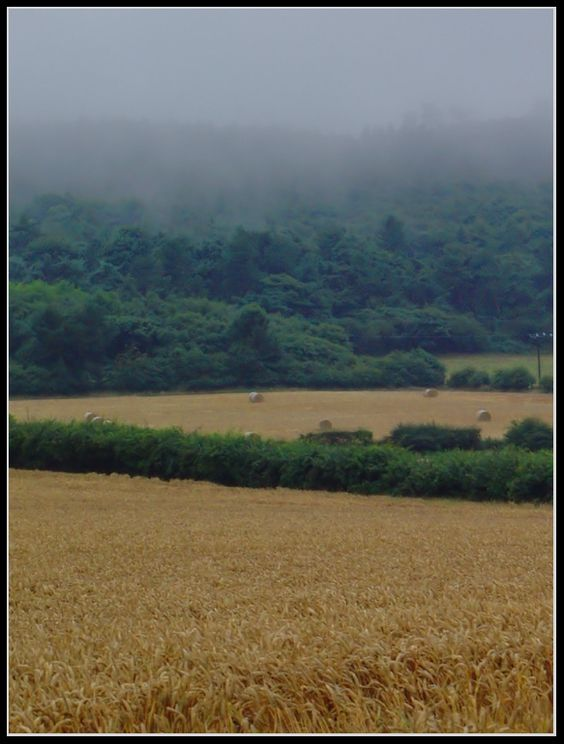 Autumn Is Here.. - Marske, North Yorkshire, England Copyright: Steven Danby