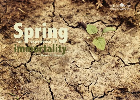 """""""Spring - an experience in immortality"""" - Henry D. Thoreau"""