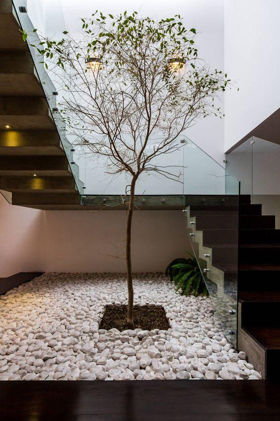 Fotos de pasillo hall y escaleras de estilo arbol for Arboles altos para jardin