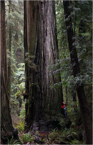Jedediah Smith Redwood State Park in Northern California