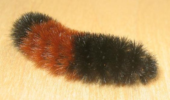 I loved playing with fuzzy caterpillars when I was a kid.