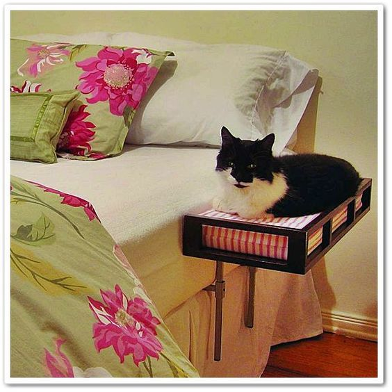 Idea For Cat Bed Seriously My Cat Sleep Right By My Head