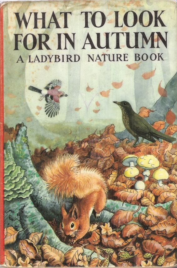 WHAT TO LOOK FOR IN AUTUMN Vintage Ladybird Book Nature Series 536 Matte……