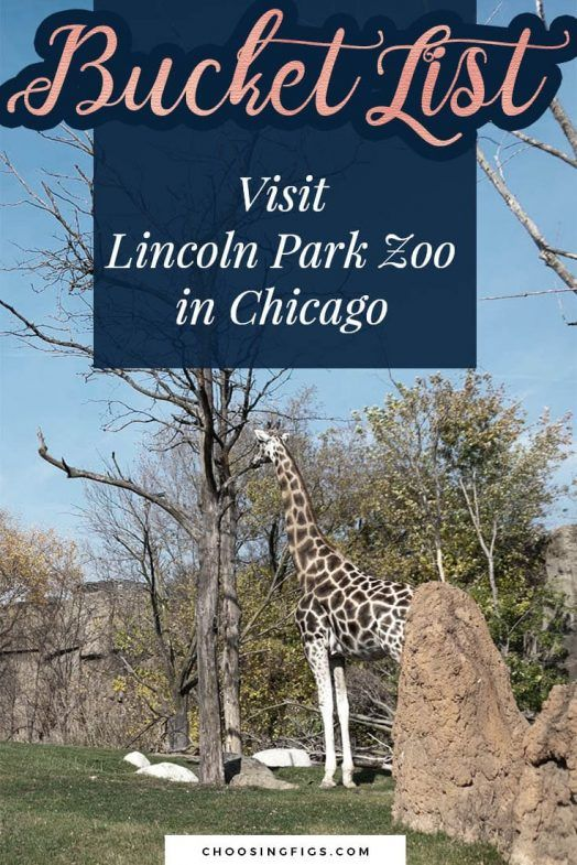I Ve Been To The Zoo Choosing Figs Road Trip Places Road Trip Usa Usa Travel Destinations