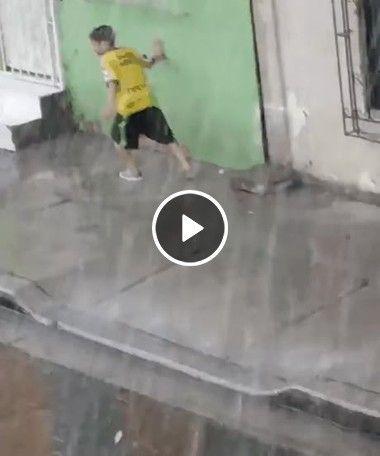 Cachorro se diverte com chuva que esta dando lá fora.