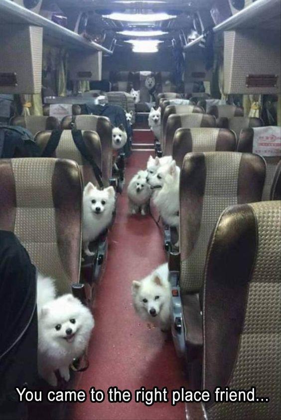chiens uniques aux monde  9dd0e229df6c4246c9e961c4513111a9