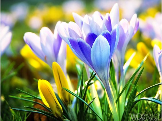 Early Spring Flowers Wallpaper Background Image ...