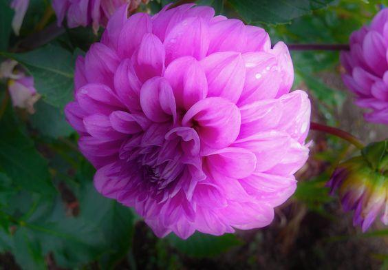 summer flower by Tim Ernst on 500px