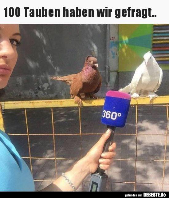 Lustige witze 100 Beste Witze.