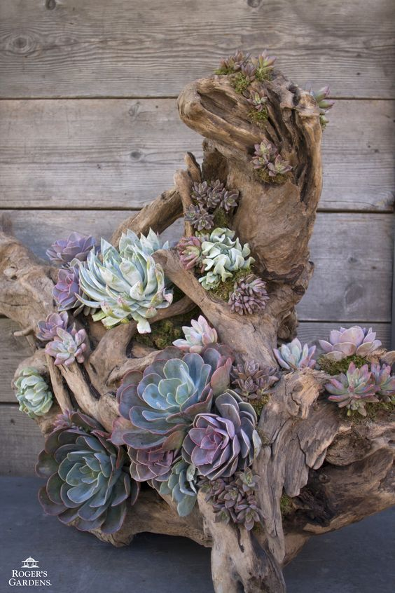 California Friendly works of art! Driftwood and various succulents... http://rogersgardens.com/design-ideas/: