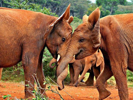 baby Elephants ..