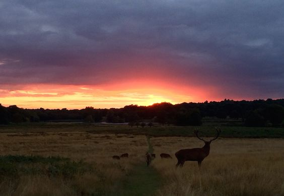 Rutting season with amazing sunset.