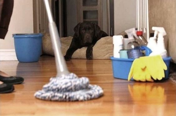 Here are some useful tips of house cleaner selection.