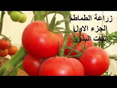 Youtube Vegetables Food Tomato