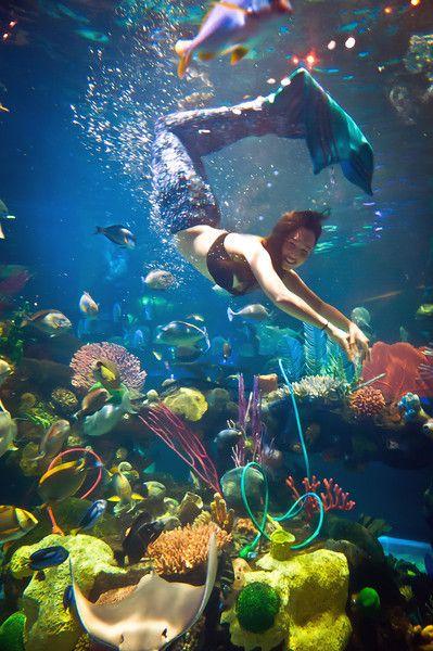 The aquarium mermaids and aquarium on pinterest for Mermaid fish tank