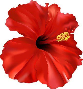 Hibiscus Flower Clipart - ClipArt Best   Hello Hibiscus ...