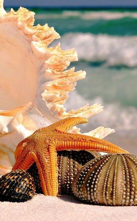 Las conchas – VIVIR ENTRE FLORES