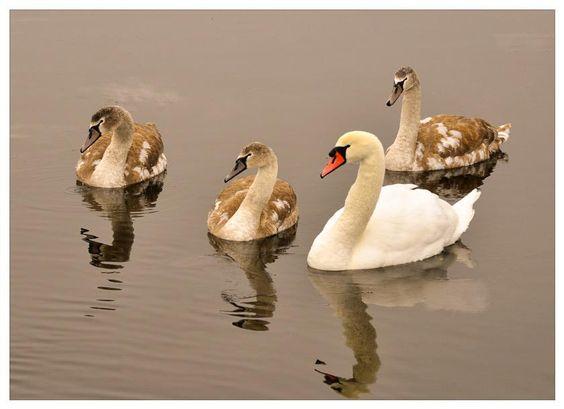 Sweet family.♡