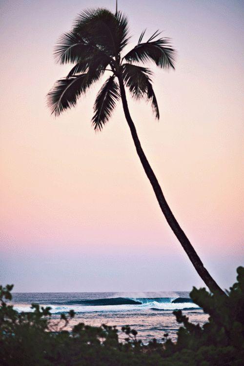 spread aloha