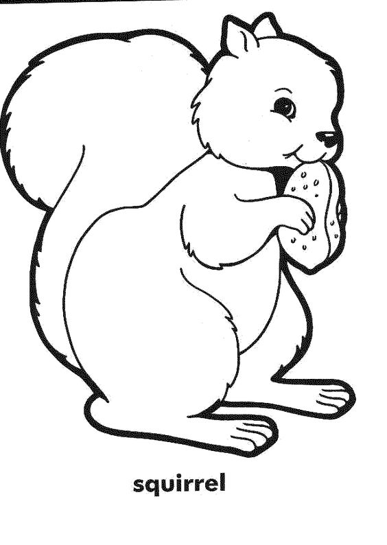 Squirrel coloring pages and coloring on pinterest for Coloring page of a squirrel