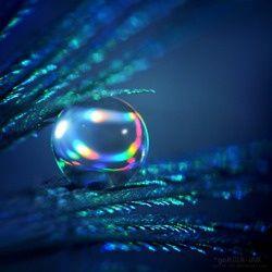 dew droplets | Dew Drops
