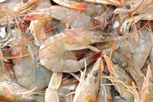 How to peel prawns - Best Recipes