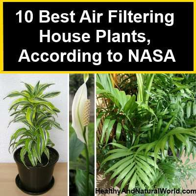 House plants plants and nasa on pinterest - Best plants for home ...