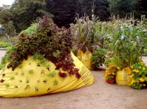 One can garden in garbage bags