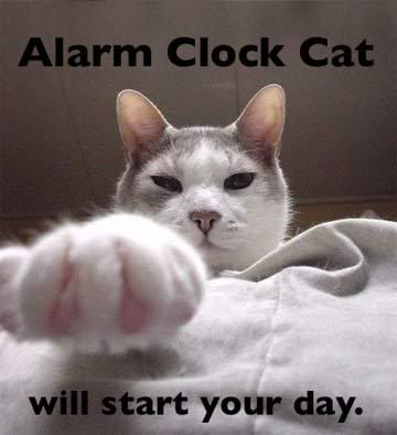 "cats wake up owners | There is no ""snooze button"" included!:"
